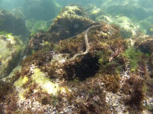Diving in Black Sea_snake on the reef_VODASPORT